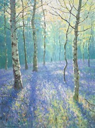 Bluebells and Silver Birches by James Preston -  sized 24x32 inches. Available from Whitewall Galleries